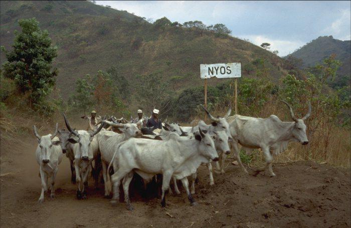 Lake Nyos: plan for degassing lakes Nyos and Monoun, Cameroon. Gas ...